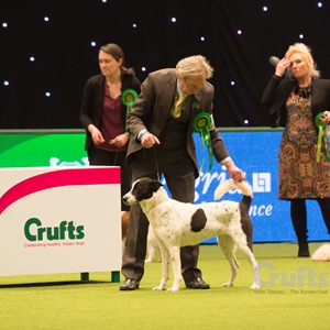 Astor in Group Crufts 2017