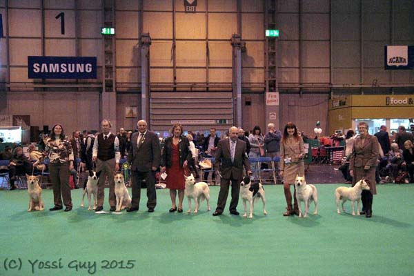 Entries at Crufts 2015