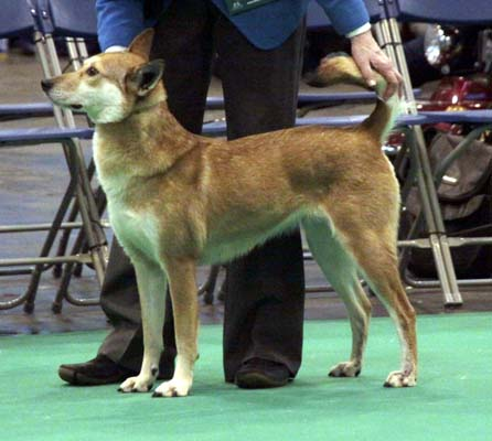 Ruby at Crufts 2013