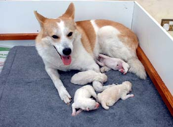Tara & her 2005 litter of pups.